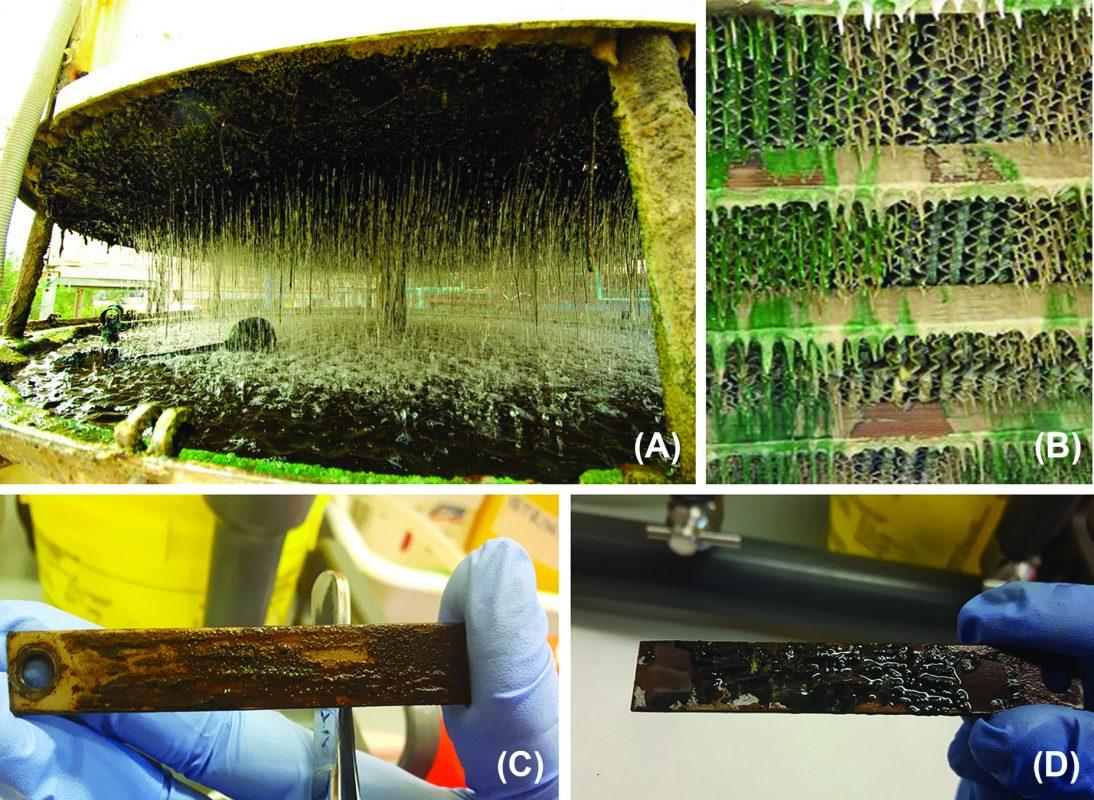 biofilm in mediu unui sistem industrial de racire a apei