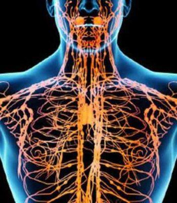 sistem limfatic, masaj limfatic, drenaj limfatic